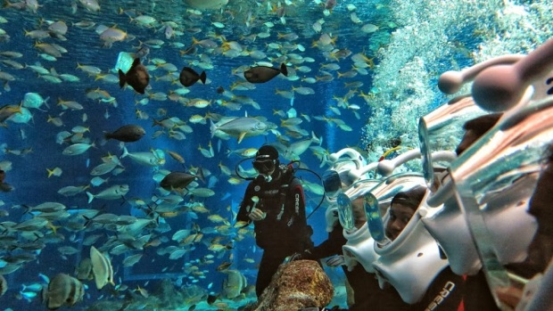 Bali Sea Walker