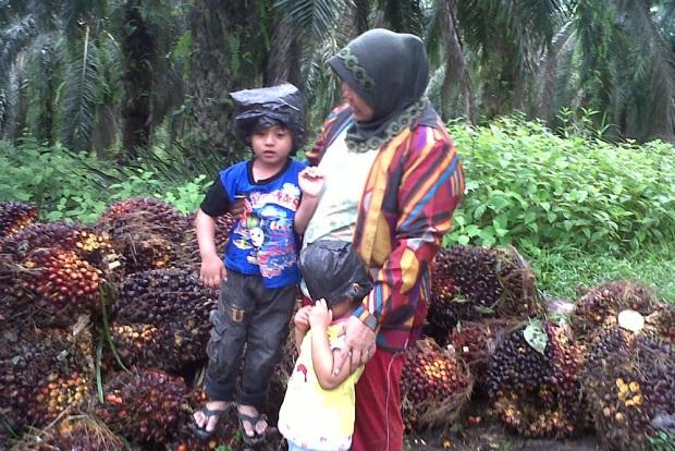 Ibu dan anak-anak panen sawit