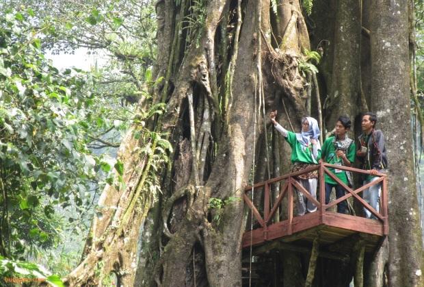 rumah pohon Welo Asri Petungkriyono