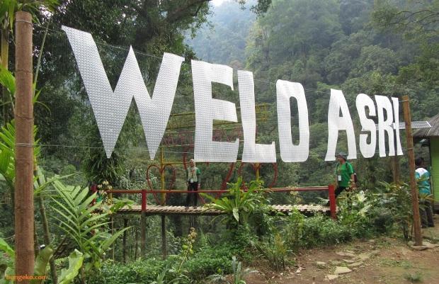 Wisata Sungai Welo Asri Petungkriyono