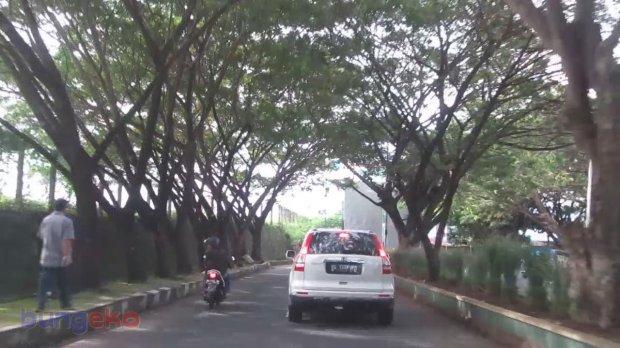 Jalan rindang menuju bandara Ternate