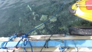 Bulu babi di dermaga Pelabuhan Perikanan Nusantara Ternate